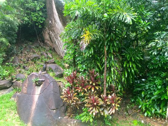 Prema Shanti Yoga & Meditation Retreat: Prema Shanti's rainforest garden