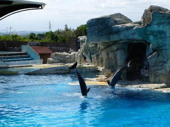 Riccione, Italy: Spettacolo delfini