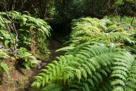 jardim botanico horta faial ? Doitri.com