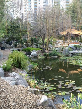 Winding path in the Chinese Garden, Sydney - Picture of Chinese ...