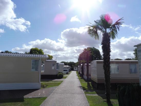 The Foxhunter Park: more views of the grounds and the many palm trees growing