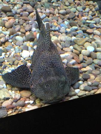 Weymouth, UK: Big Fish