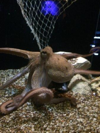 Weymouth, UK: Octopussy
