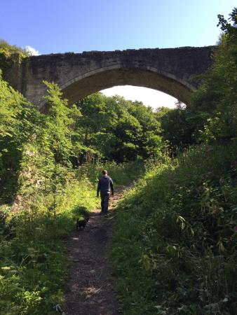 Causey Arch: Lovely walk out with the dog