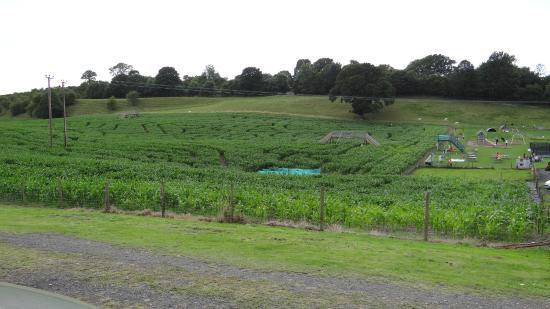 Kendal, UK: The maze at the Farm Park