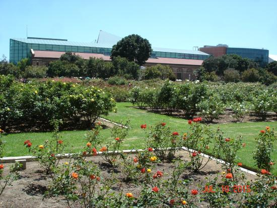 Exposition Park: Looking south toward the California Science Center