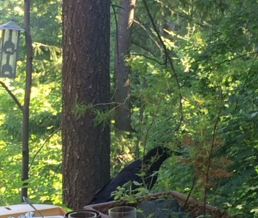 In the Selkirk Mountains B&B: Friendly crow joined us at breakfast