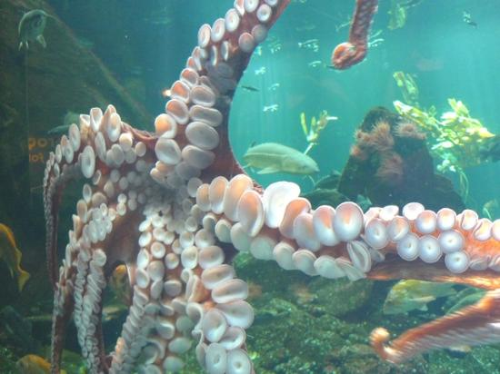Jelly Fish Picture Of Vancouver Aquarium Vancouver Tripadvisor