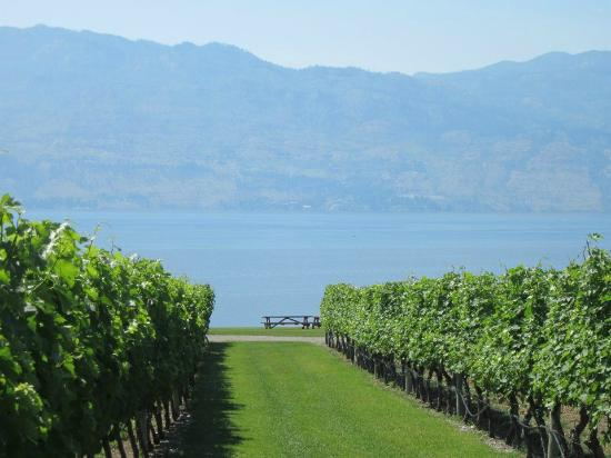 West Kelowna, Canadá: view over the vineyard and lake
