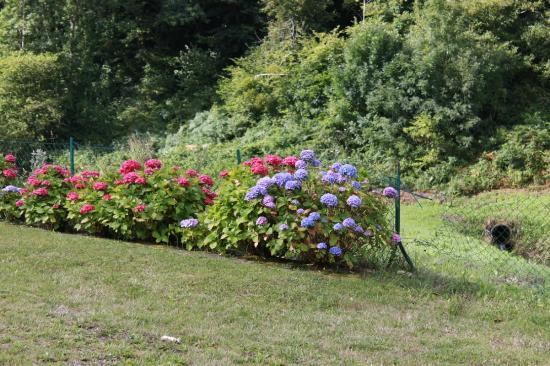 Иль и Вилен, Франция: i giardini intorno sono circondati da siepi di ortensie