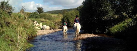 Hollywood Horse and Pony Trekking Centre