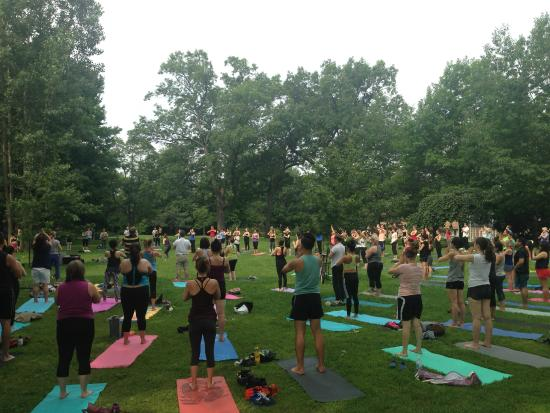 Branch Yoga & Wellness