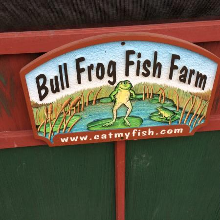 "The Bullfrog Fish Farm: ""Eat My Fish!"""