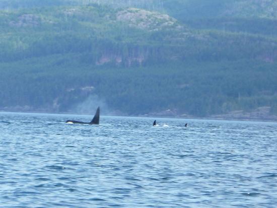 Black Creek, Kanada: Whales!!!