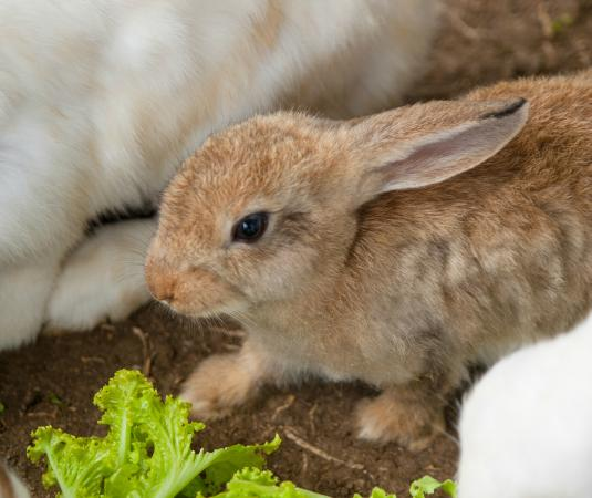 Hotel Kimberly: Feeding rabbits in the petting farm