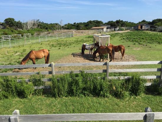 Ocracoke Pony Pens