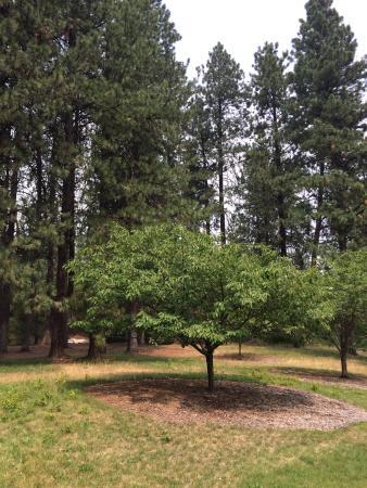 John A. Finch Arboretum : photo1.jpg