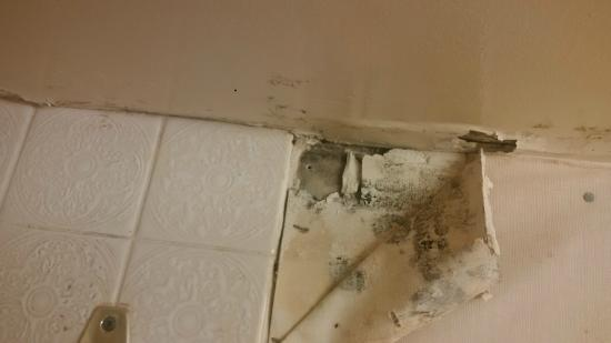 Cassandra Hotel: Black mould in the bathroom. Not even trying to hide this?