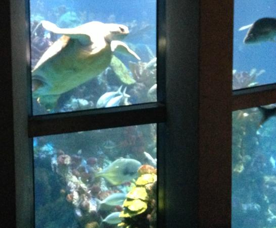 Drago Di Mare Picture Of New England Aquarium Boston Tripadvisor