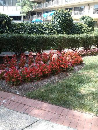 BEST WESTERN Fairfax : Near our room..love the landscaping...