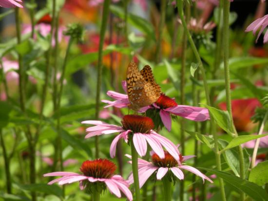 Delaware Water Gap National Recreation Area: Butterfly