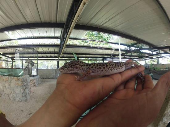 Bioparque y Albergue Animal Chan Tamam