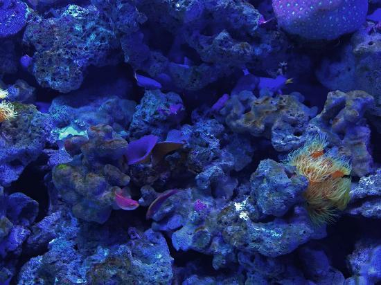 Photo of Aquarium Aquaria KLCC at Kuala Lumpur Convention Centre Complex, Kuala Lumpur 50088, Malaysia