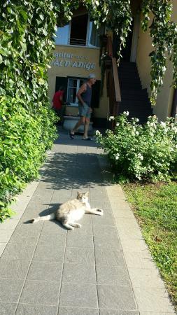 """Agritur Val d'Adige: """" il gatto di casa """""""