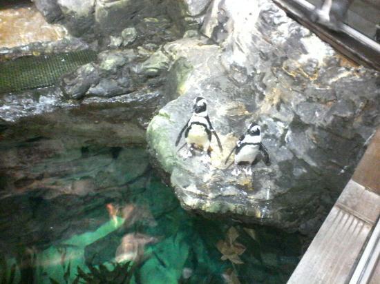Aquarium de Montpellier - Picture of Aquarium Mare Nostrum ...