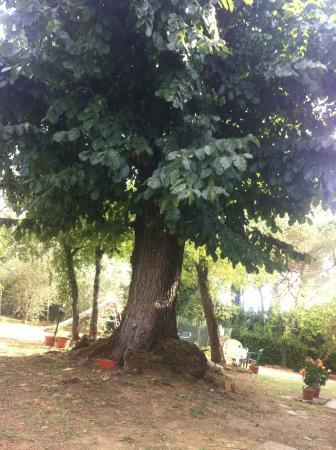 Azzurre B&B: L'albero secolare