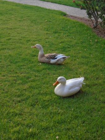 Ducks :)