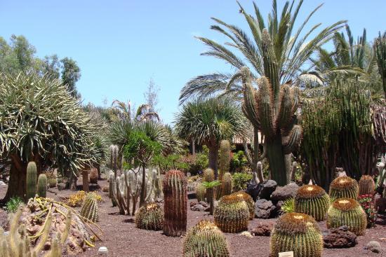 Picture of Oasis Park Fuerteventura, Fuerteventura - TripAdvisor