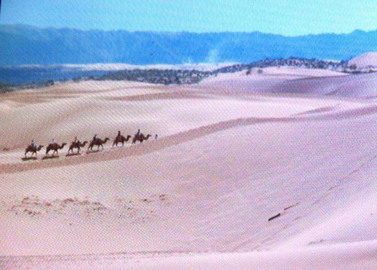 Tenggeli Desert : Parque de atracciones.Quisimos ver el desierto por nuestra cuenta,pero como todo en China,no te
