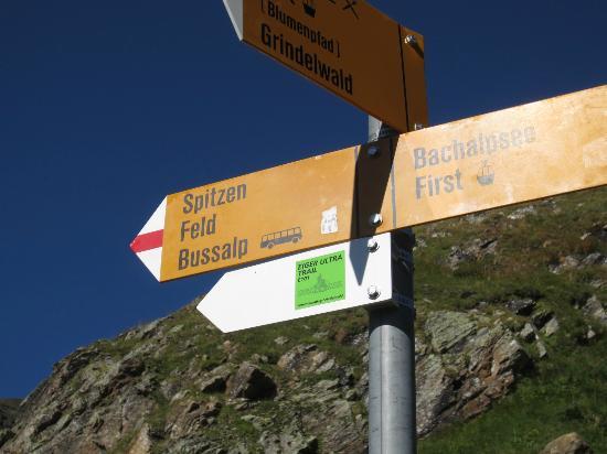 Grindelwald, Switzerland: ここを起点にするハイキングコースが。真ん中に赤線のあるコースは中級なのでトレッキングシューズが必要です。