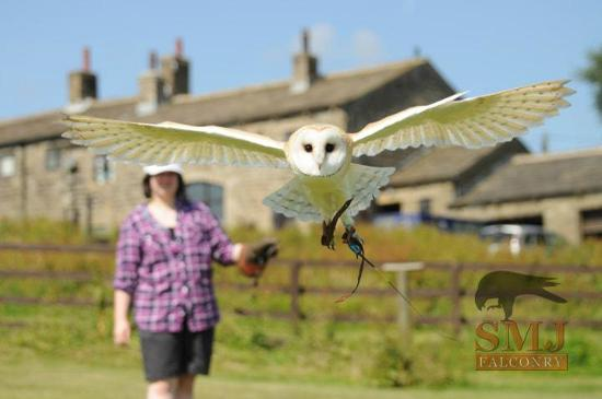 SMJ Falconry: Owl Encounter