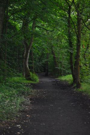 Leigh, UK: covered walkway in the woods