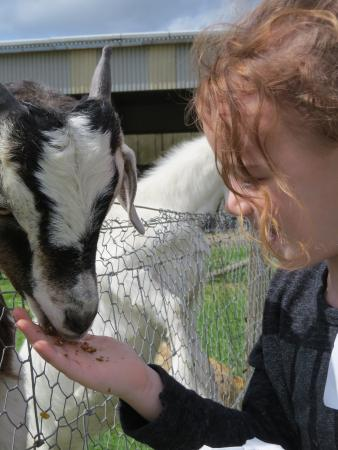 Robertson's The Larder Tomich Farm Shop and Childrens Farm: 'my new best friend'