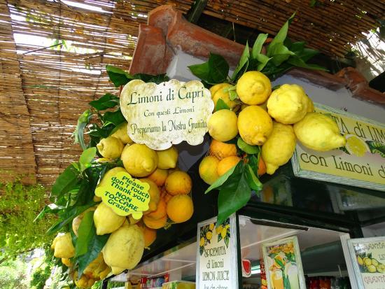 Limoncello di Capri - 2020 All You Need to Know BEFORE You Go ...