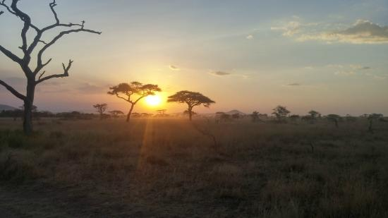 Аруша, Танзания: Serengeti Sunset