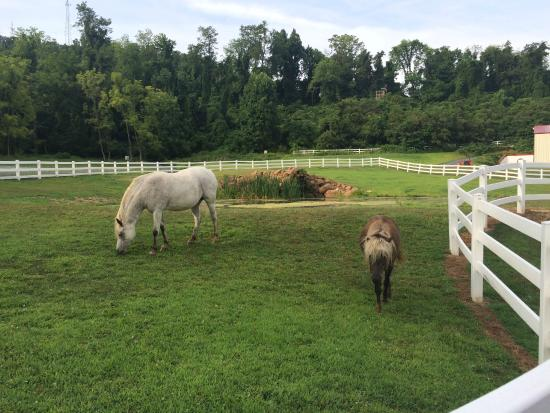 Pleasant View Farm Bed and Breakfast Inn : The pasture