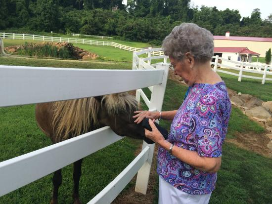 Pleasant View Farm Bed and Breakfast Inn : Mom making friends with a pony