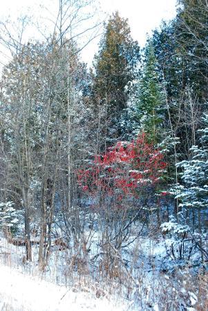 Winter in Bellaire