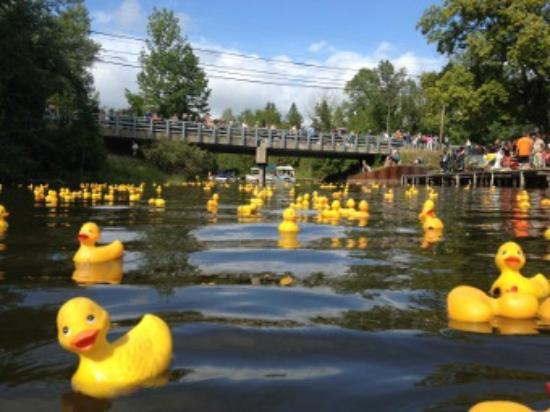 Bellaire, MI: Rubber Ducky Festival
