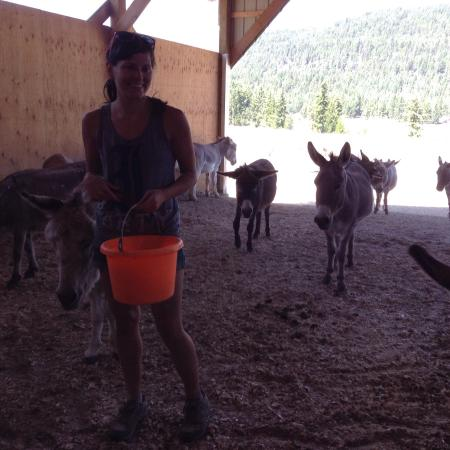 Turtle Valley Donkey Refuge: Well worth a visit