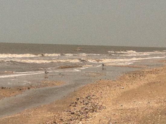 Cameron Parish Beach Rentals