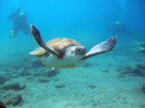 My internship at excel scuba - Review of Excel Scuba