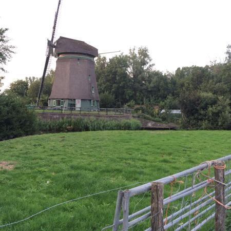 Aartswoud, The Netherlands: photo5.jpg