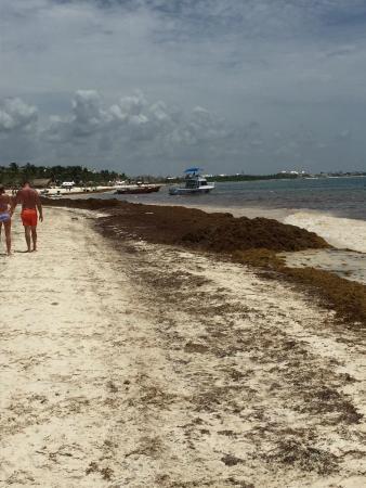 Playa Maroma, México: Seaweed