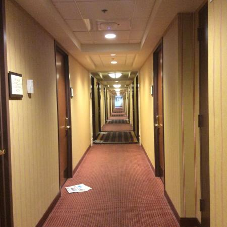 The Four Points by Sheraton Norwood Hotel & Conference Center: Level 5 Hallway of the Hotel