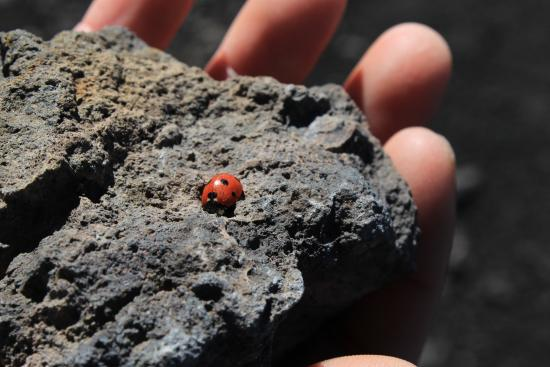 mount etna rock dating Volcanic eruption when the rock actually formed date by radiometric dating mt etna basalt, sicily 122 bc 170,000–330,000 years old mt etna basalt, sicily.